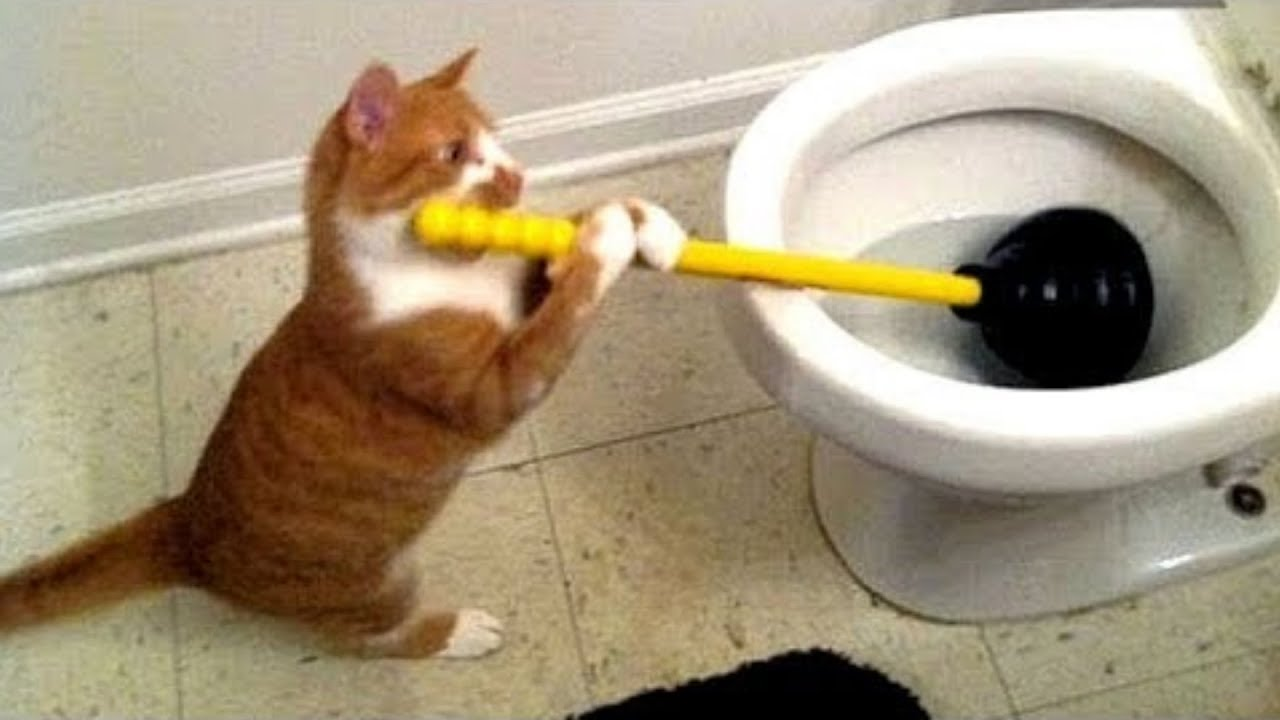 Funny videos about cats