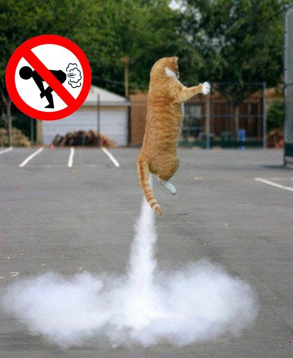 Dog farts golden retriever   Dog farts, Animal captions ...   Animal Fart Memes