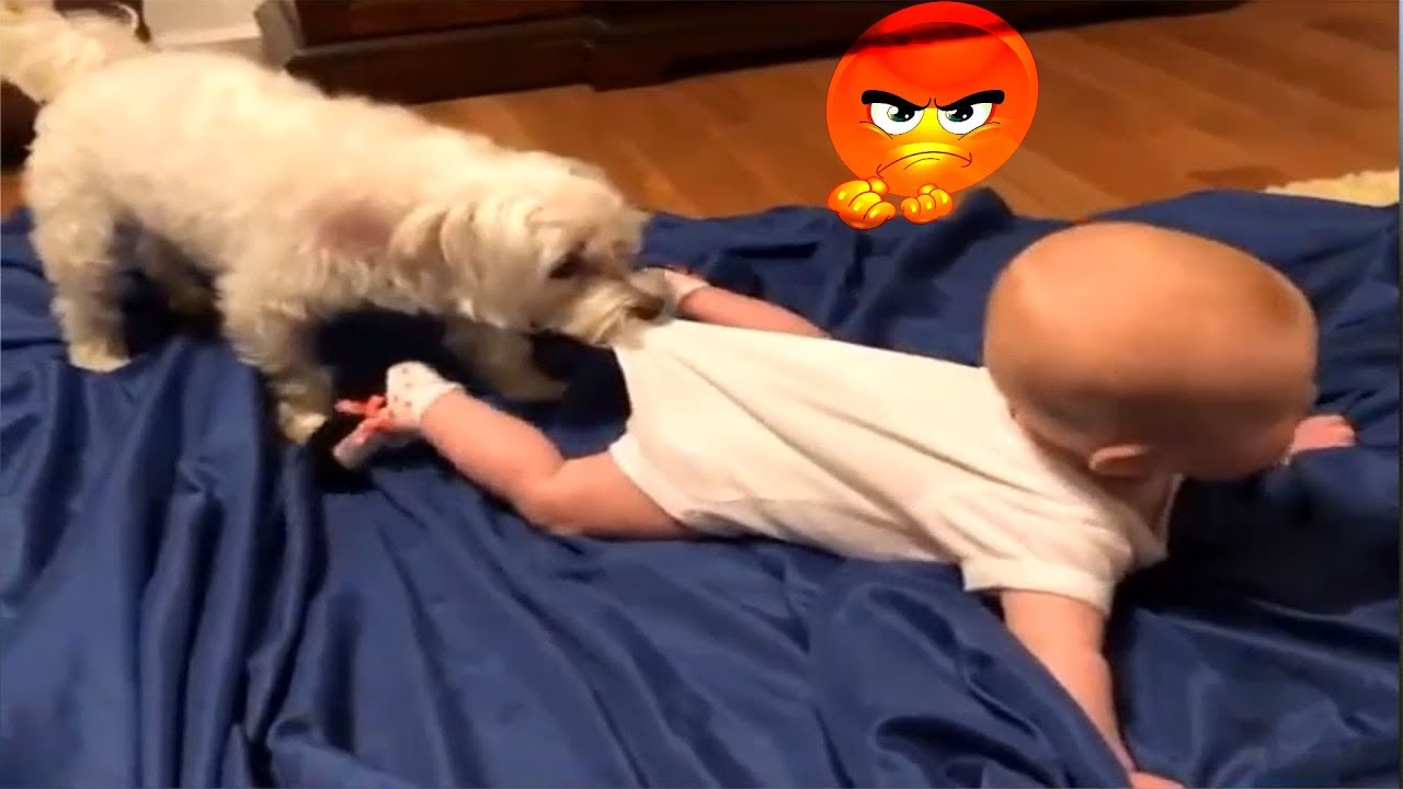 Image of: Laugh Challenge Funny Cat Videos Wallpapers Funny Dog And Cat Videos For Kids To Watch Compilation Funny