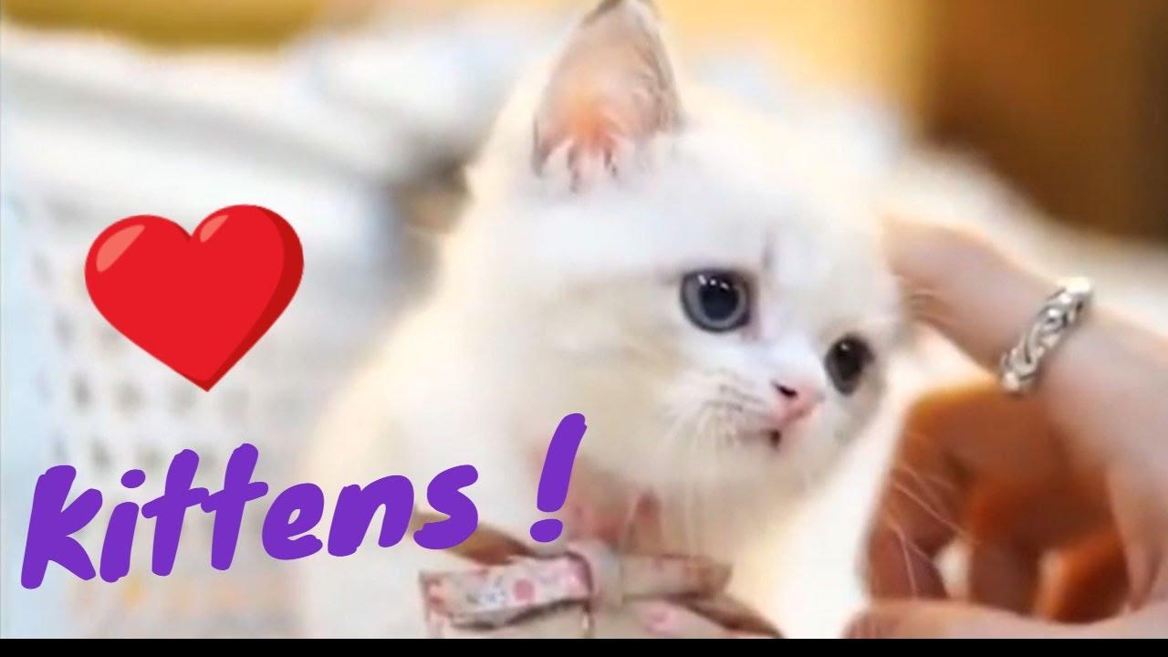 Funniest Funny Cat Videos Video Blog Log3 adorable Kittens Funny Cat Videos Cute Cats And Kittens