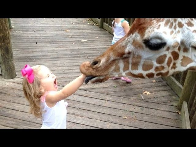 FORGET CATS! Funny KIDS vs ZOO ANIMALS are WAY FUNNIER ...